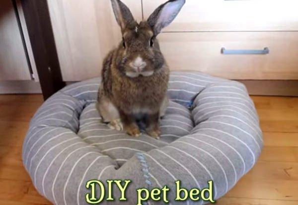 DIY cama mascota